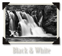 Black & White Gallery